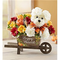 a-dog-able-for-fall-167670-5b896f8d7d959.365