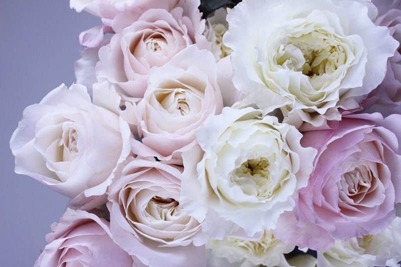 light pink and white flowers